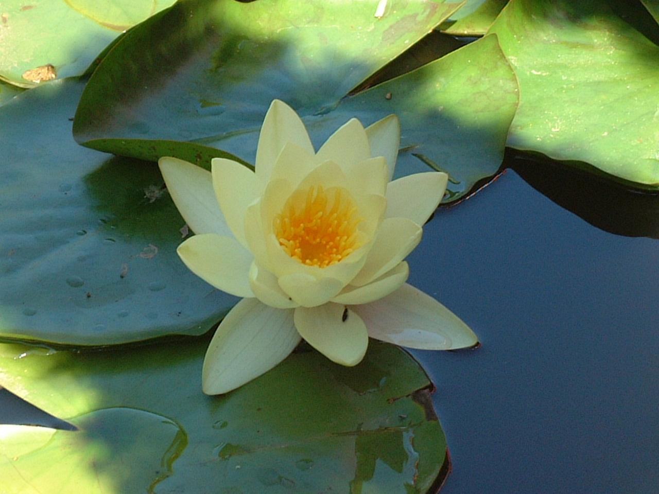 Patrick barret nous les nous a quitt messager de lumi re - Image fleur de lotus ...