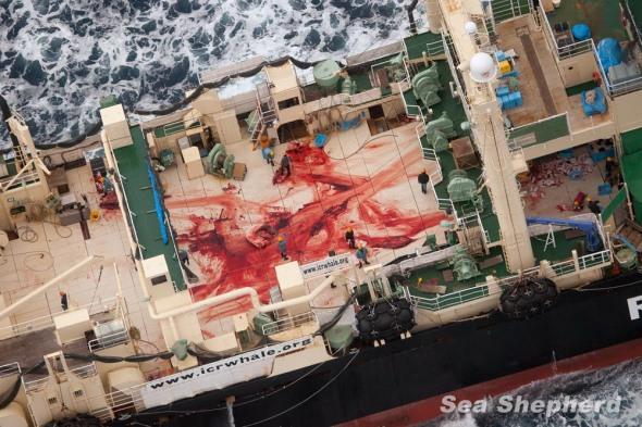 news-160324-1-2-nisshin-maru-bloody-deck-0024190-1000w